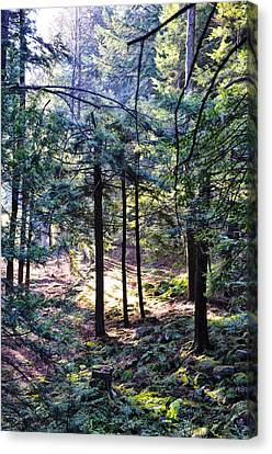 Walking In The Woods Canvas Print by Bill Cannon