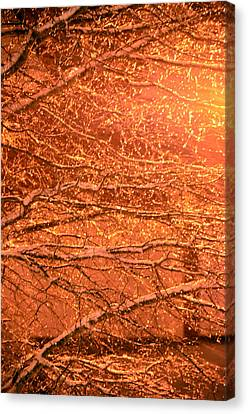 Warm Icy Reflections Canvas Print by Sandi OReilly