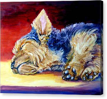 Warm Spot - Yorkshire Terrier Canvas Print by Lyn Cook