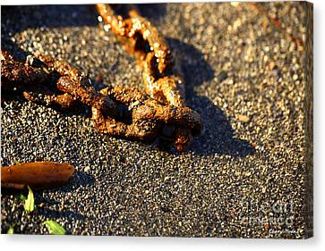 Washed Ashore Canvas Print by Cheryl Young