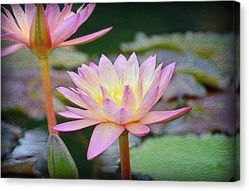 Water Lilies Canvas Print by Steven  Michael