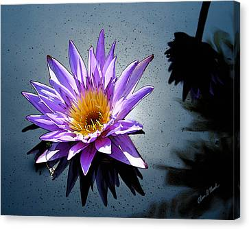 Water Lily Dream At Fairchild 2 Canvas Print by Olivia Novak