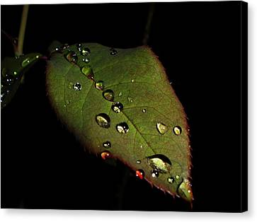 Watered-leaf Canvas Print by Rosvin Des Bouillons