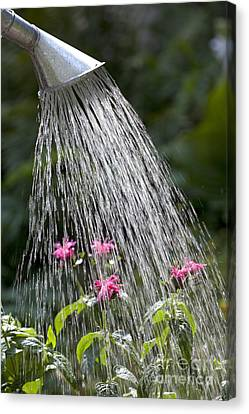 Watering Can Canvas Print by Picture Partners and Photo Researchers