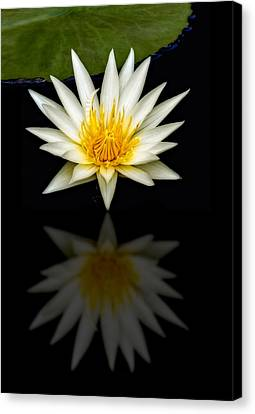 Waterlily And Reflection Canvas Print by Susan Candelario