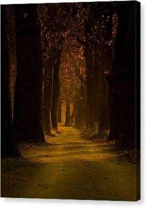 Way In The Forest Canvas Print by Zafer GUDER