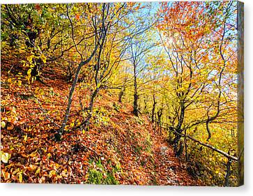 Way To The Chapel Canvas Print by Evgeni Dinev