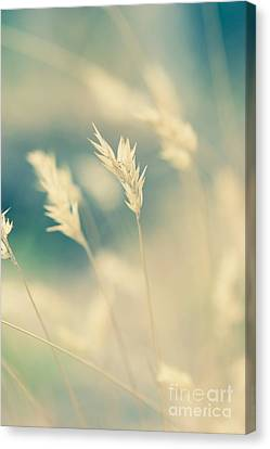 Wayside Grass - Light Canvas Print by Hideaki Sakurai