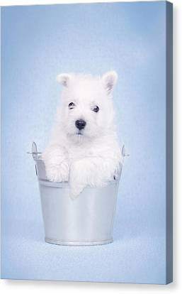 West Highland White Terrier Puppy In The Bucket  Canvas Print by Waldek Dabrowski