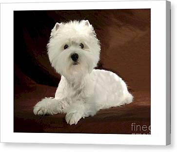 Westie 315 Canvas Print by Larry Matthews