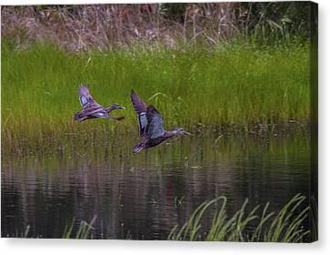 Wetland Wonders Iv Canvas Print by Dave Kelly