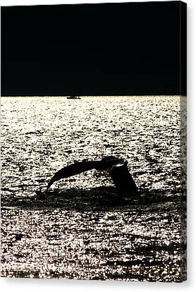 Whale In Sunset Canvas Print by Paul Ge