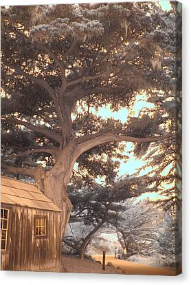 Whaler's Cabin Canvas Print by Jane Linders