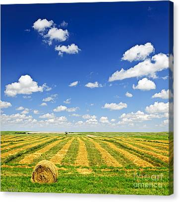 Wheat Farm Field At Harvest Canvas Print by Elena Elisseeva