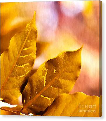 When Leaves Turn Gold Canvas Print by Artist and Photographer Laura Wrede