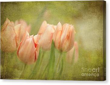 Whisper To Me Softly Canvas Print by Beve Brown-Clark Photography