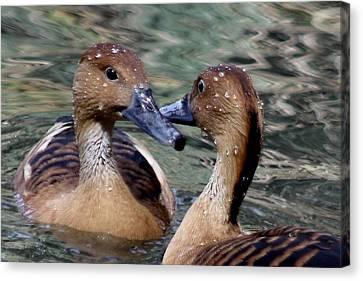 Whistling Ducks Canvas Print by Paulette Thomas
