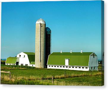 White And Green Barns Canvas Print by Steven Ainsworth