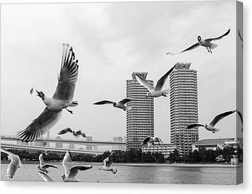 White Birds In Flight Canvas Print by BZause a picture is worth a thousand words.