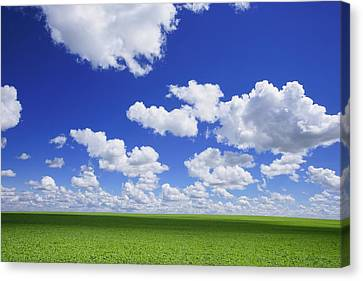 White Clouds In The Sky And Green Meadow Canvas Print by Don Hammond