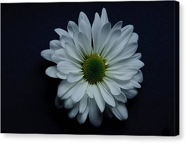 White Flower 1 Canvas Print by Ron Smith