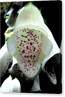 Flowers Canvas Print featuring the photograph White Foxglove by Roberto Alamino
