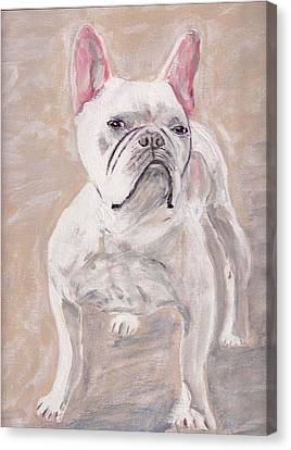 White Frenchie Canvas Print by Arthur Rice