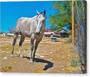 White Horse Canvas Print by Gregory Dyer