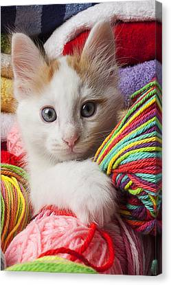 White Kitten Close Up Canvas Print by Garry Gay