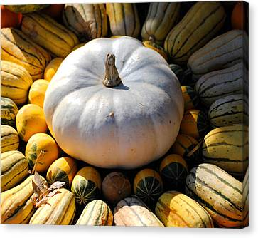 White Pumpkin Canvas Print by Jai Johnson