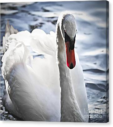 White Swan Canvas Print by Elena Elisseeva