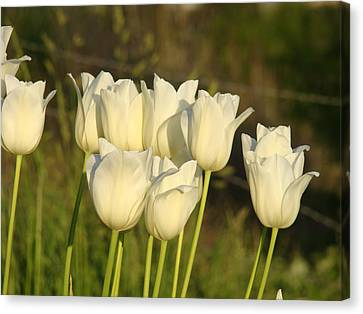 White Tulip Flowers Art Prints Spring Green Garden Canvas Print by Baslee Troutman
