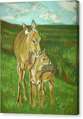 Whitetail Doe And Fawn Canvas Print by John Keaton