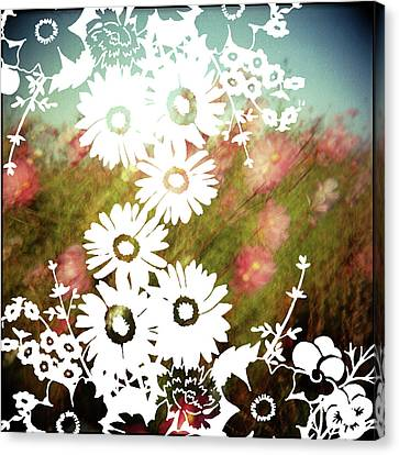 Wild Flowers Canvas Print by Jenene Chesbrough