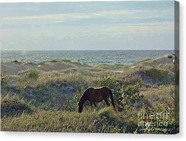 Wild Mustang Canvas Print by Laurinda Bowling