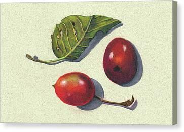 Wild Plums And Leaf Canvas Print by Joyce Geleynse