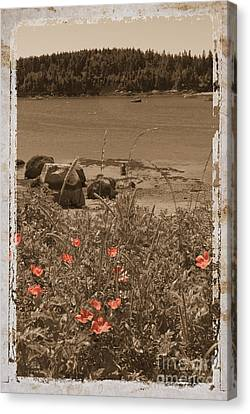 Wild Roses Canvas Print by Jim Wright