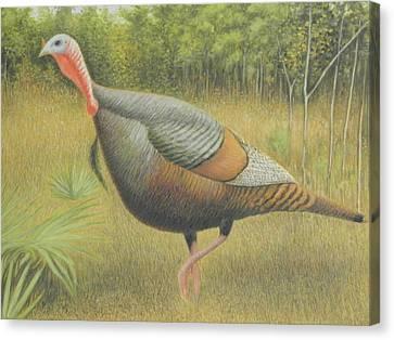 Wild Turkey Canvas Print by Alan Suliber