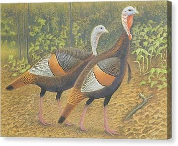 Wild Turkey Pair Canvas Print by Alan Suliber