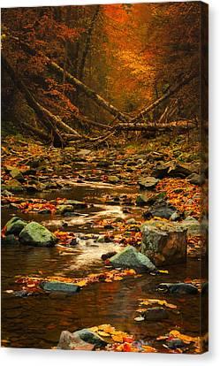 Wild Valley Canvas Print by Irinel Cirlanaru