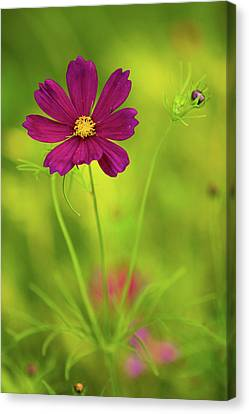 Wildflower Canvas Print by Image by Rebecca Weaver, RWeaverNest Photography