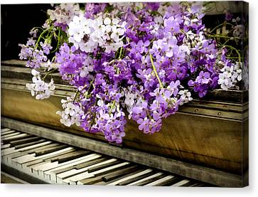 Wildflower Music Canvas Print by Kathy Jennings