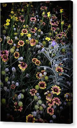 Wildflowers 5 Canvas Print by Mauricio Jimenez