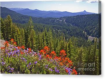 Wildflowers And Mountaintop View Canvas Print by Ellen Thane and Photo Researchers