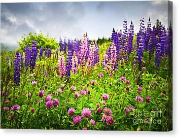 Wildflowers In Newfoundland Canvas Print by Elena Elisseeva