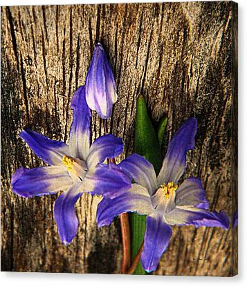 Wildflowers On Wood Canvas Print by Chris Berry