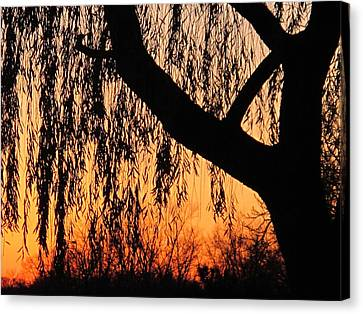 Willow At Sunset Canvas Print by Valia Bradshaw