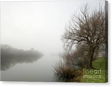 Willow In Fog Canvas Print by David Lade