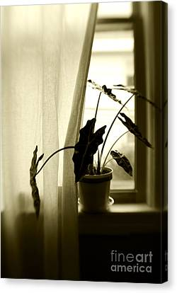 Window Canvas Print by HD Connelly