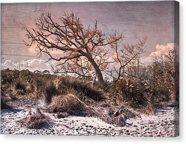 Windswept At Driftwood Beach Canvas Print by Debra and Dave Vanderlaan